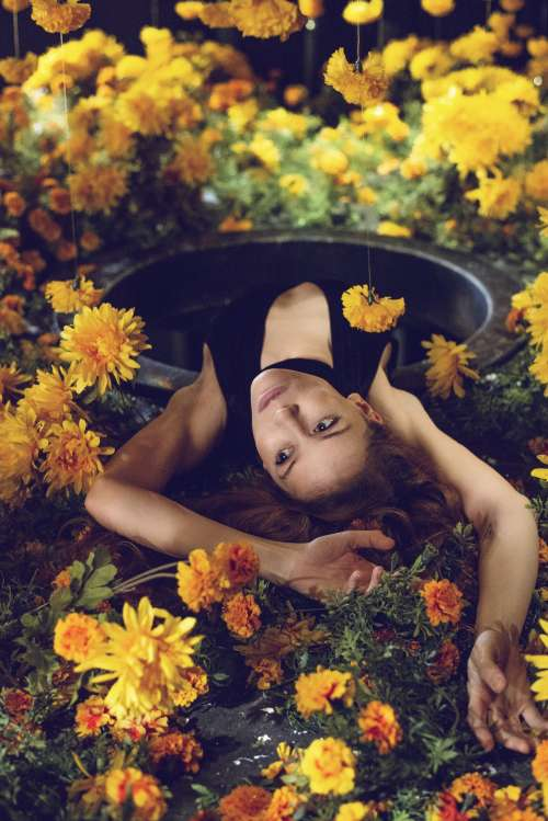 Into The Rabbit  Hole And Back Into a Garden Of Marigolds Photo