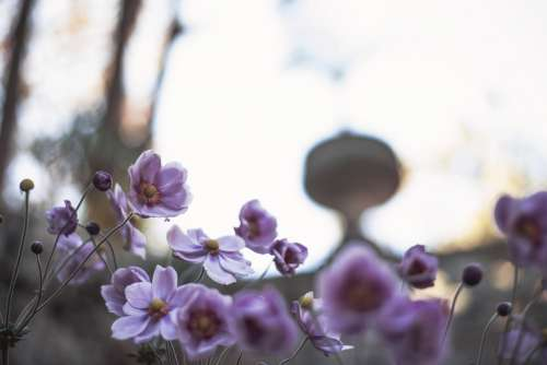 Light Creeps Behind Blossoming Flowers Photo