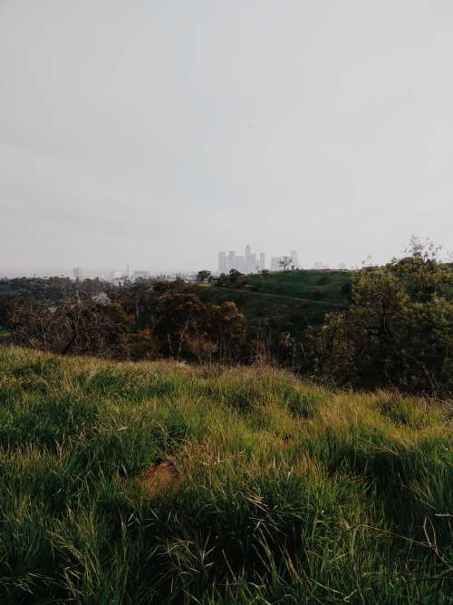 Los Angeles Skyline From Park Photo