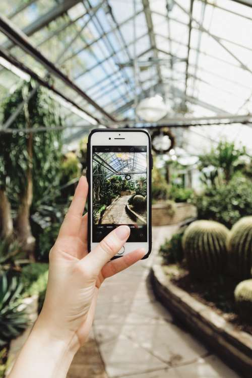 Mobile Phone Photography In Greenhouse Photo