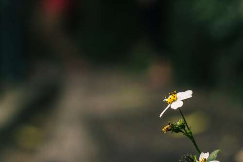 One Single Daisy Photo