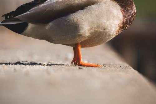 Orange Duck Feet Photo