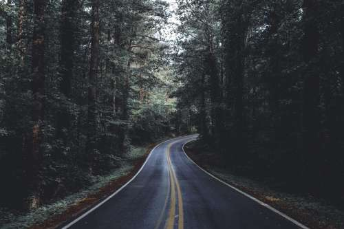 Paved Road Through Forest Photo