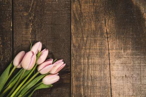 Pink Tulips On Wood Texture Photo