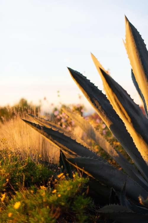 Plants Take In The Sunlight In An Open Field Photo