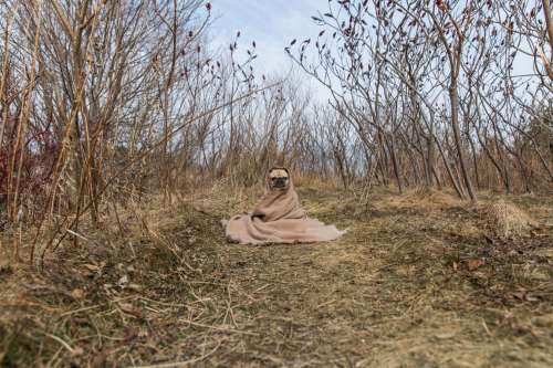 Pug In A Blanket On A Path Photo
