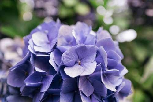 Purple Flower Petals Close Up Photo