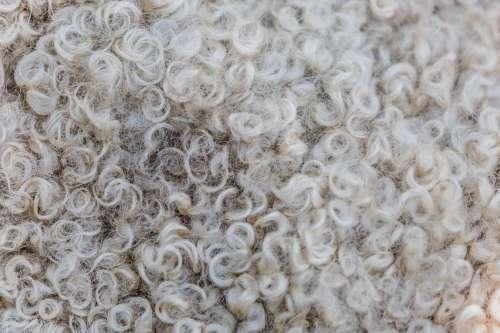 Sheep's Wool Texture Photo