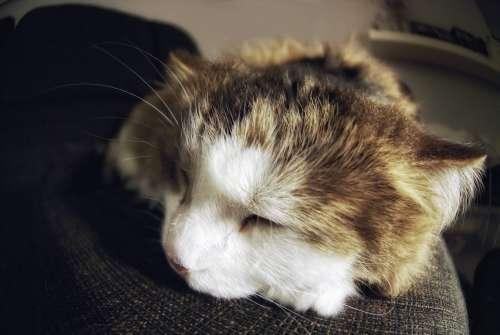 Sleeping Cat Close Up Photo