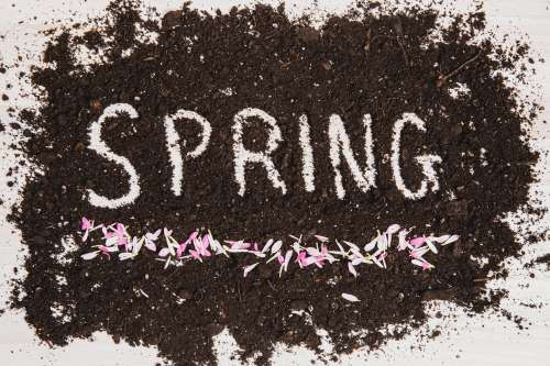 Spring In Dirt With Flower Pedals Photo