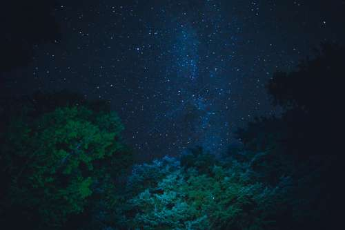Starry Night Sky From Below Trees Photo
