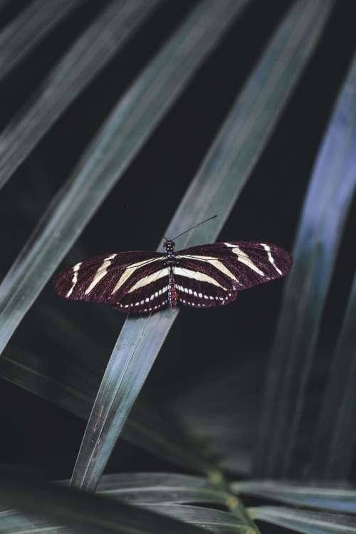 Striped Butterfly With Open Wingspan On Leaf Photo