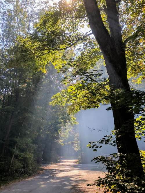 Sunbeams Streak Through Forrest Trees Photo