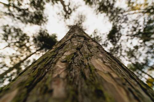 Tall Tree Trunk Close Up Photo
