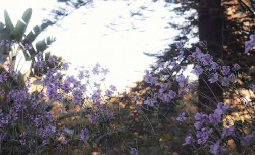 The Sunlight Illuminates Branches Behind Some Flowers Photo