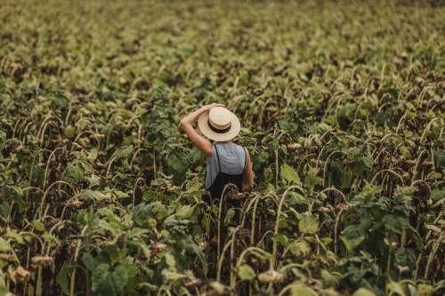 Woman Lost In A Sunflower Field Photo