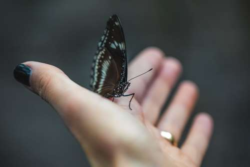 Young Woman Provides A Helping Hand To Butterfly Photo