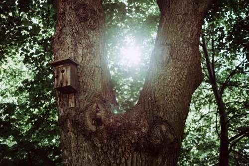 Bird house on a tree