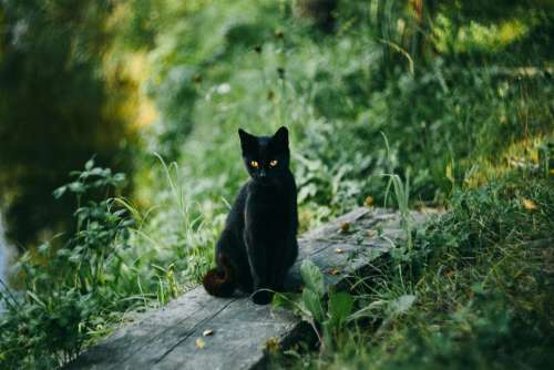 A black cat at the pond