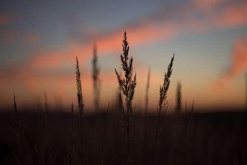 Blades of wild grass