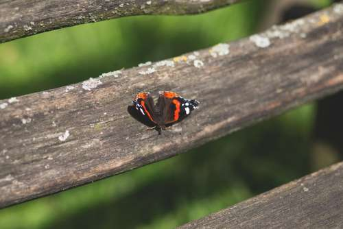 Butterfly on a bench