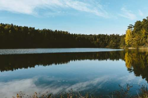 Calm lake surrounded by forest