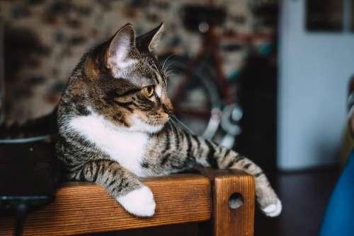 Cat sitting on a desk 3