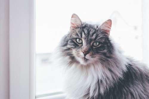 A cat sitting on a windowsill