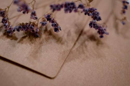 Craft envelope with dried flower closeup