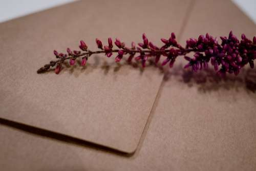 Craft envelope with dried flower closeup 2