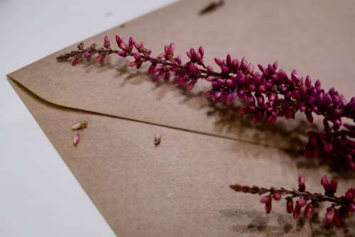 Craft envelope with dried flowers closeup