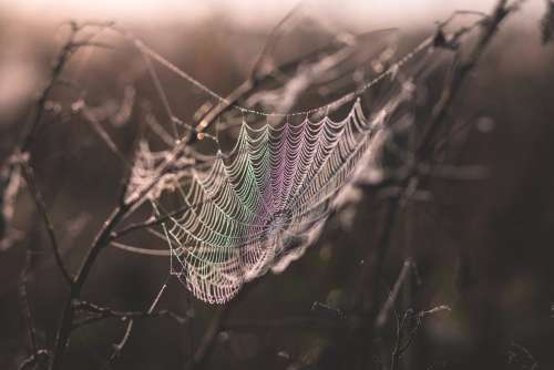 Dew on a spider's web 2