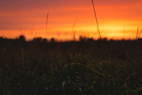 Dew on grass in the sunset 2