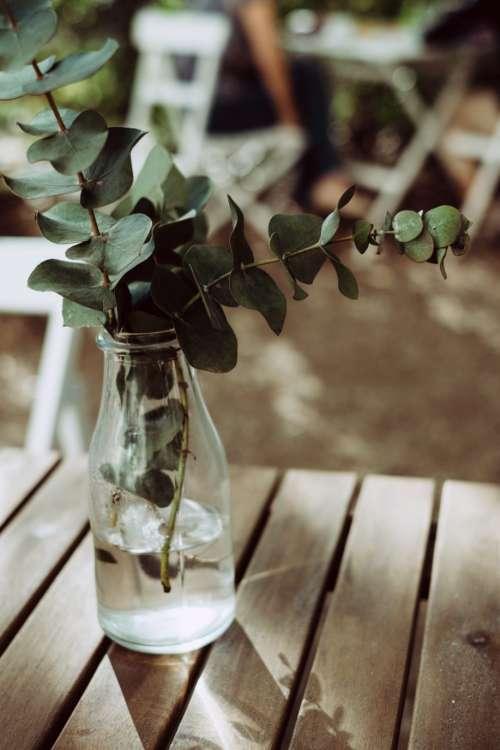 Eucalyptus twigs in a bottle