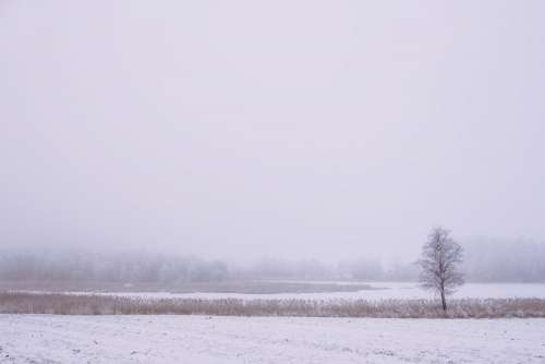 Foggy winter day in the field 3