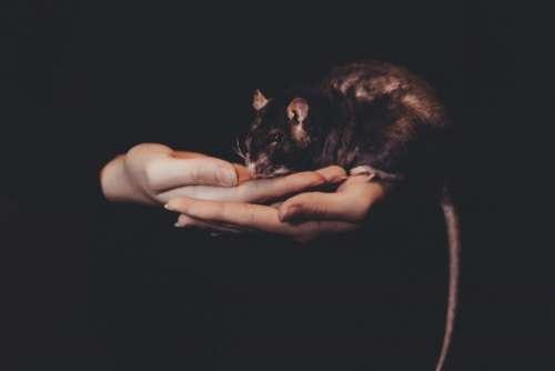 Girl holding a rat