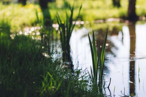 Grass at the pond