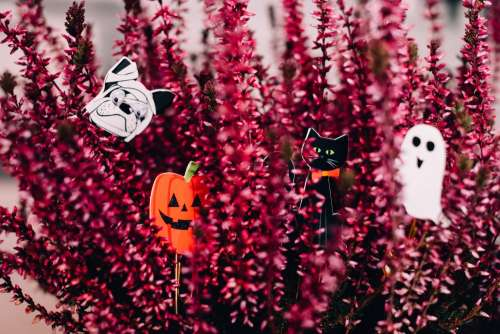 Halloween paperclips hidden in a heather flower