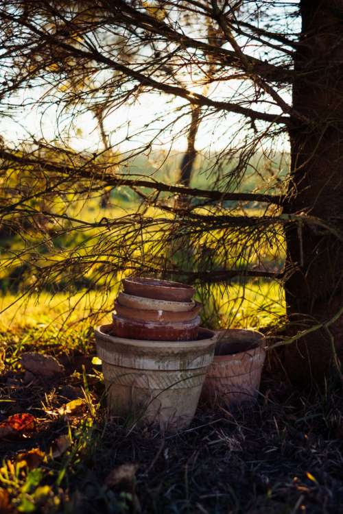 Old clay flower pots under a spruce
