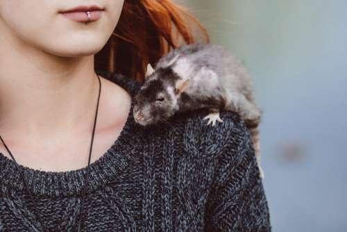 Old rat on a shoulder