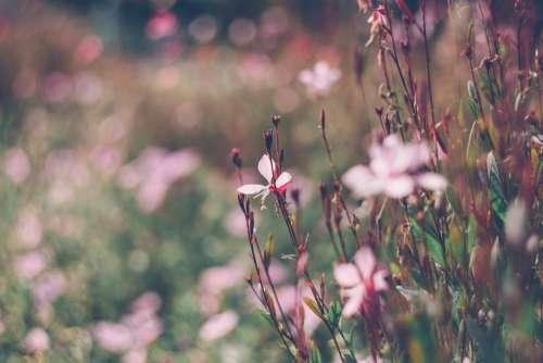 Park flowers 3