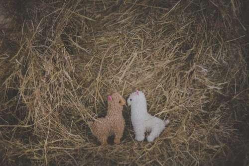 Plush alpacas