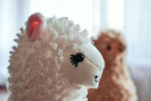 Plush alpacas 2