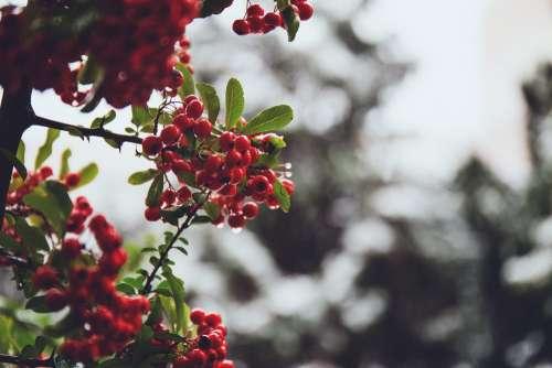 Rowan in December