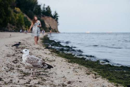 Seagull standing on the beach 2