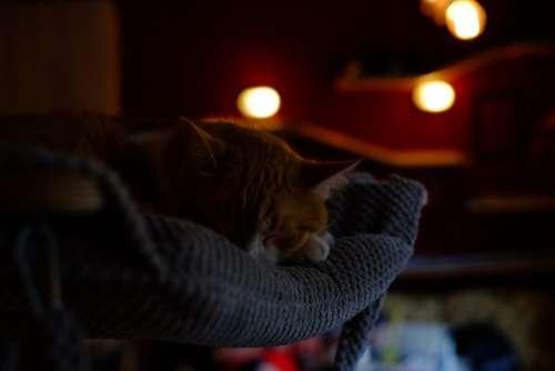 Sleeping cat 3