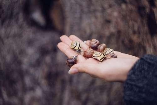 Snails on a palm