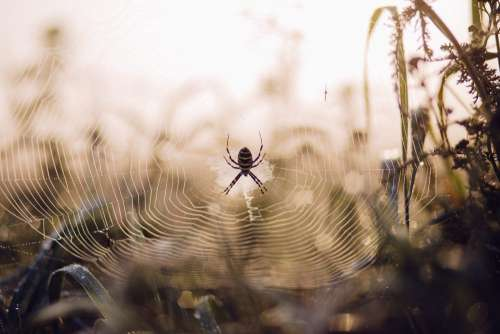 Spider on its web 2