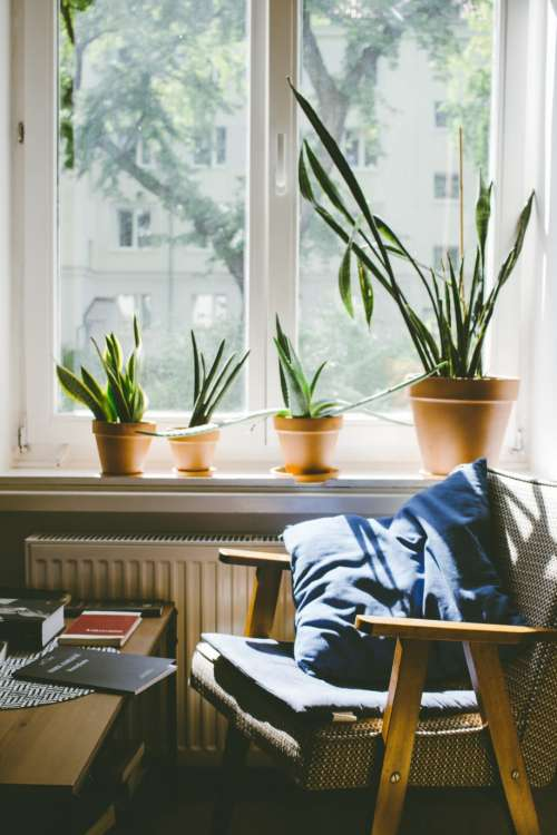 Succulent plants on a window sill 2