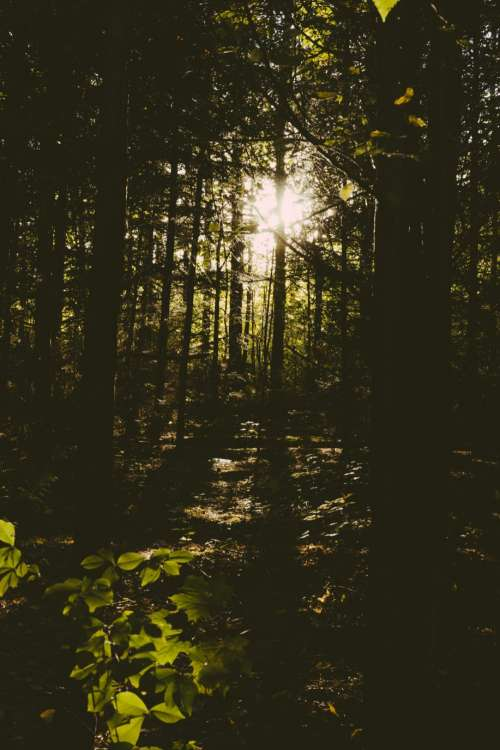Sun shining through trees in the forest